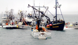 herring 05